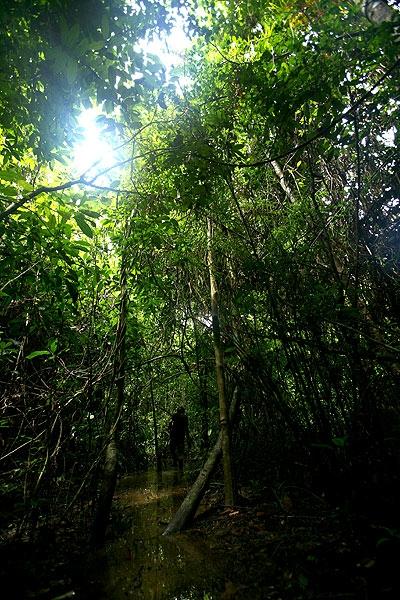 forest2.jpg