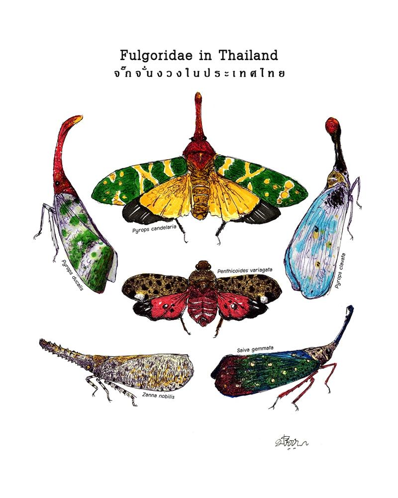 fulgoridae-in-thailand-lowres.jpg