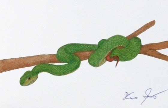 greenviper.jpg
