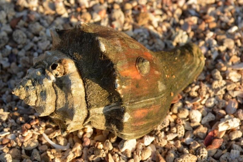 หอยชนิด3 รูป2