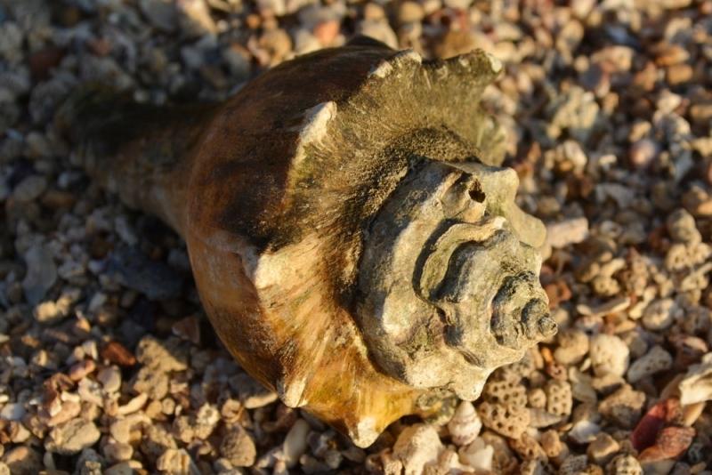 หอยชนิด3 รูป1