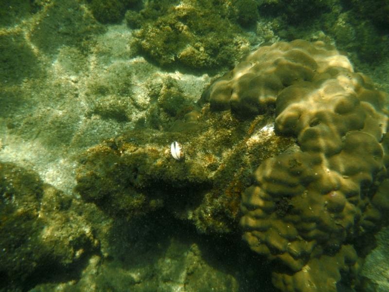 หอยชนิด4 รูป2