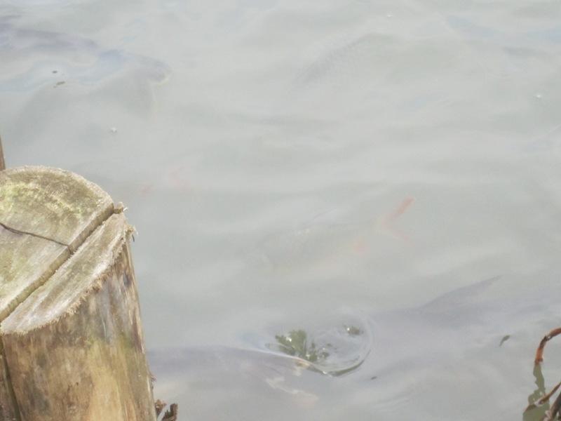 ก็เหมือนวัดทั่วๆไปนั่นแหละ ที่มีปลาหน้าวัดไว้ขายอาหารปลา