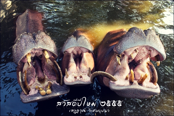 happy happy hippo hippo