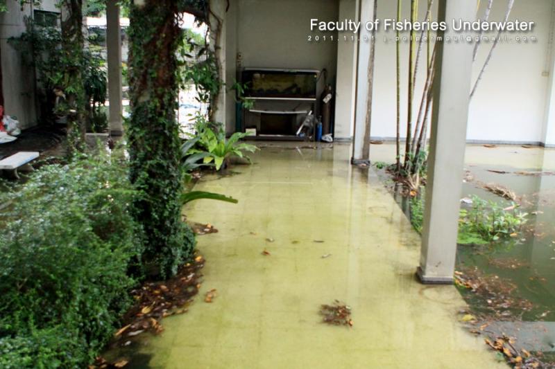 ทางเชื่อมตึกไปห้องปฎิบัติการเพาะเลี้ยงสัตว์น้ำและคุณภาพน้ำ