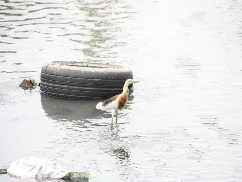 ข้างบ้านแม่ยายมีคลองน้ำน่า เลยเดินไปดู เจอ นก กะ ยาง อีก
