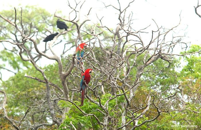 macaw_greenwing4.jpg