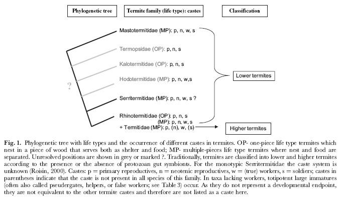 จำนวนวรรณะต่างๆ ในปลวกแต่ละวงศ์ (Korb & Hartfelder, 2008)