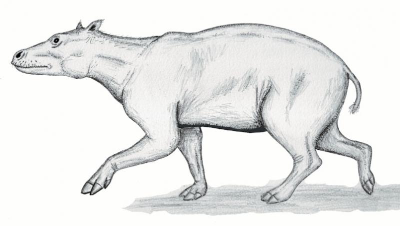 Merycopotamus thachangensis