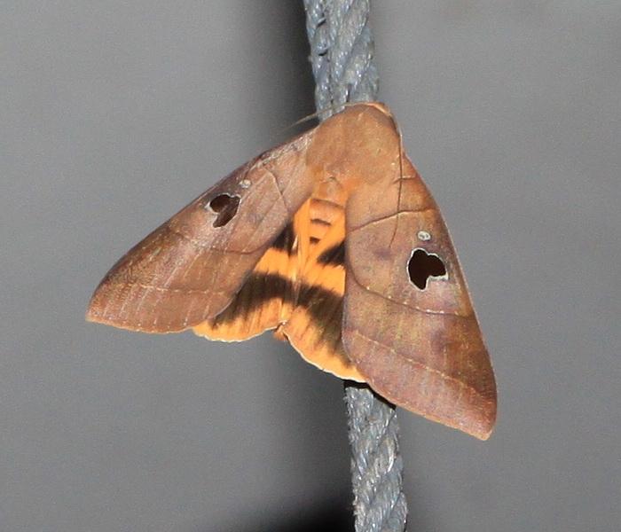 Moth 1-2