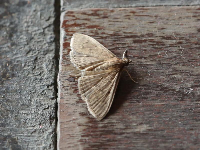 Moth-3