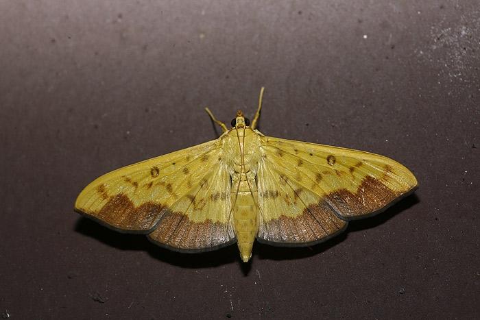 moth4.jpg
