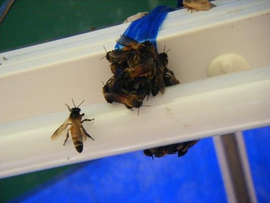 ผึ้งเต็มหลอดไฟ
