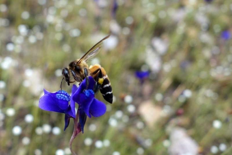 ผึ้ง2.jpg
