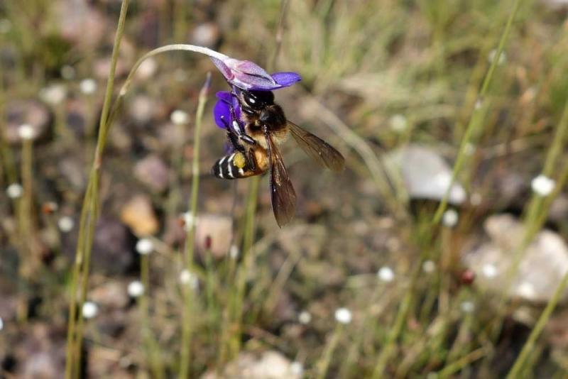 ผึ้ง1.jpg