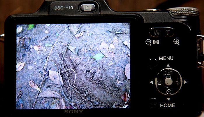 ภาพรอยเท้าใกล้ๆรังจากกล้องของชาวบ้าน