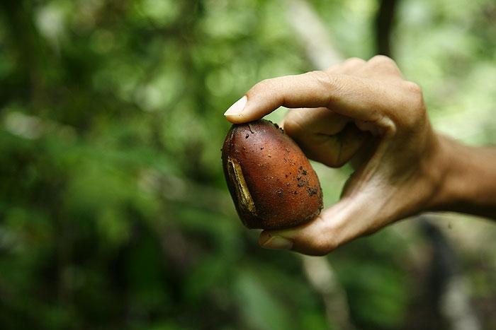 ถั่วแดงยักษ์ เป็นเมล็ดของพืชอะไรครับ?