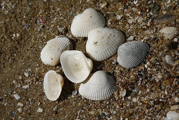 shell10.jpg