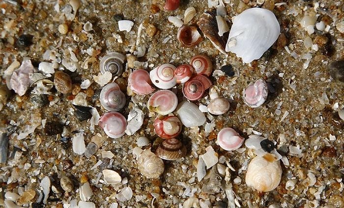 shell12.jpg