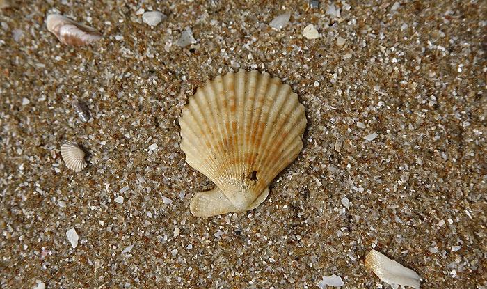 shell17.jpg