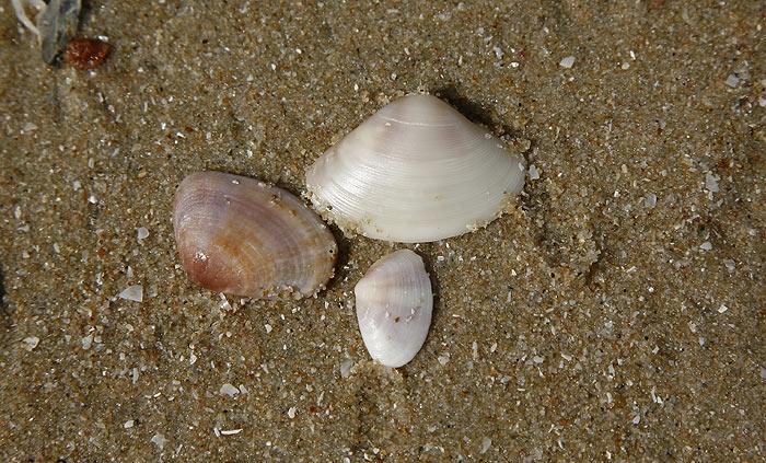 shell6.jpg