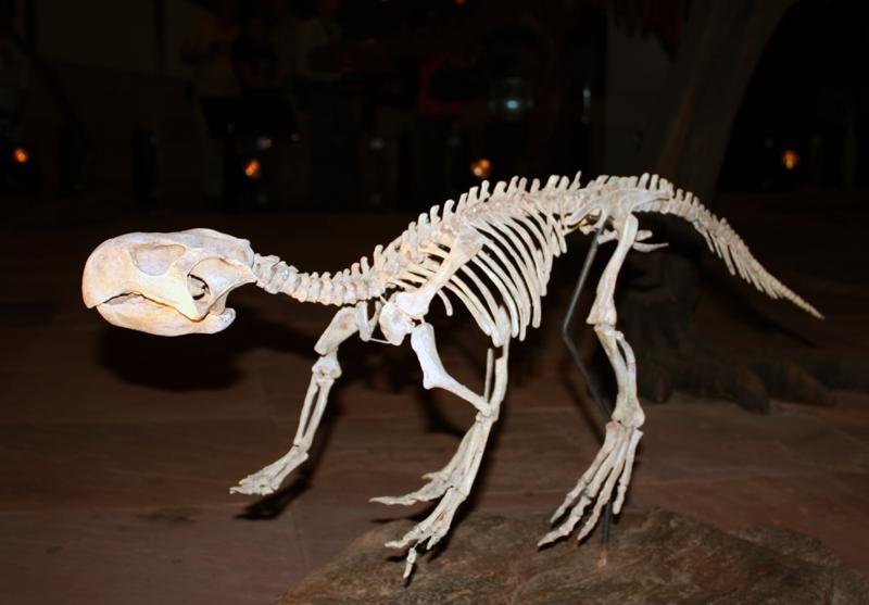 ไดโนปากนกแก้วสัตยารักษ์ Psittacosaurus sattayaraki ชัยภูมิ