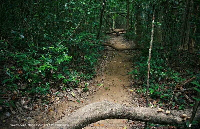 สภาพผืนป่าดิบแล้ง แห่งศูนย์วิจัยสิ่งแวดล้อมสแกราช