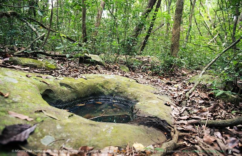 โอเอซิสกลางป่า ที่เป็นหลุมน้ำกระจายพันธุ์ของสัตว์สู้ชีวิต