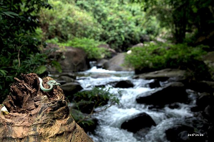 snake_fall.jpg