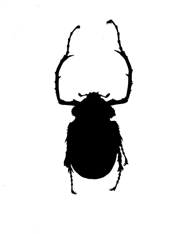 C.gestroi