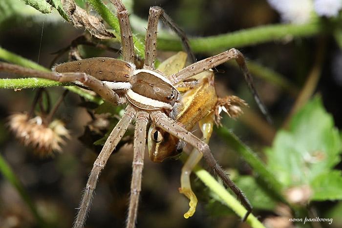 spider_frog.jpg