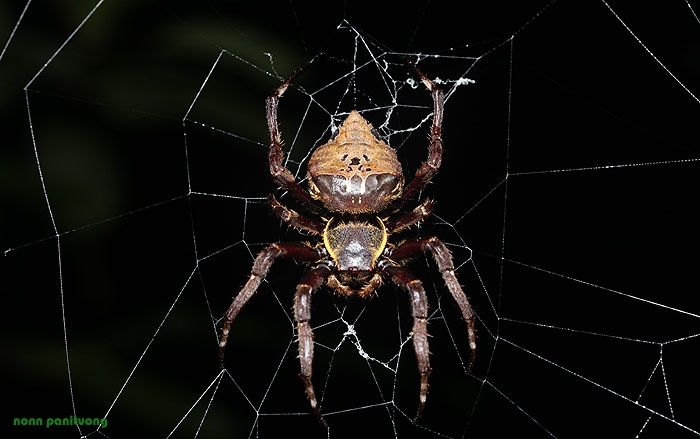 spider_large.jpg