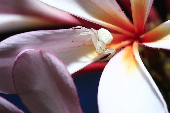 spider_white.jpg
