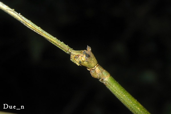 stick-insect.jpg