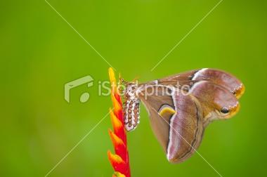 stock-photo-17783644-moth.jpg