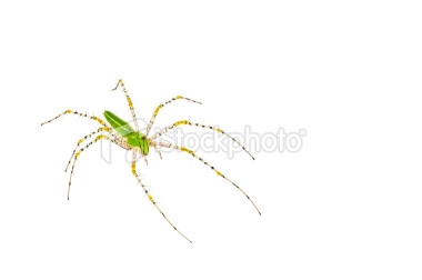 stock-photo-17942970-spider.jpg