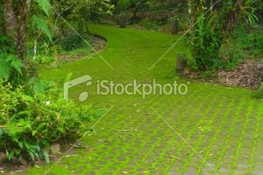 stock-photo-18026117-moss-in-the-garden.jpg