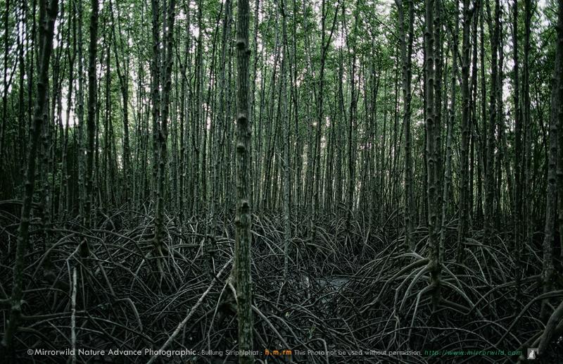 ป่าโกงกาง