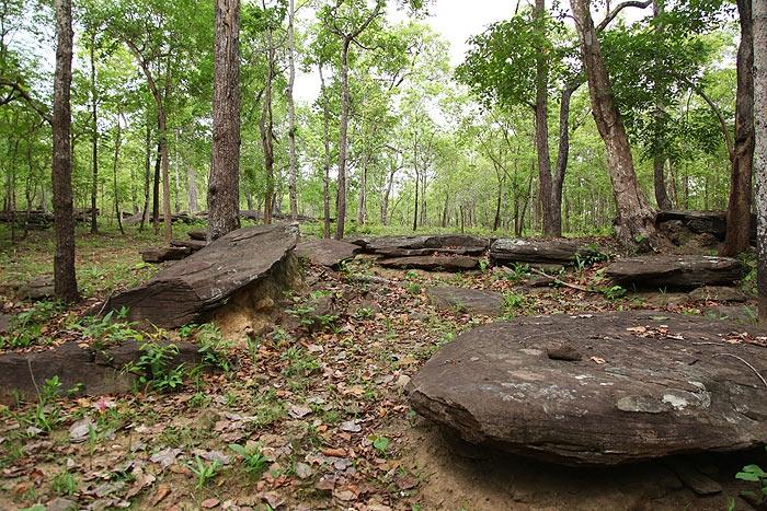 สภาพเส้นทางเป็นป่าโปร่งๆ เจอชาวบ้านเข้ามาใช้ประโยชน์กันมาก เก้บหาของป่า โดยเฉพาะตอนนี้เป็นหน้าเห็ดโคน