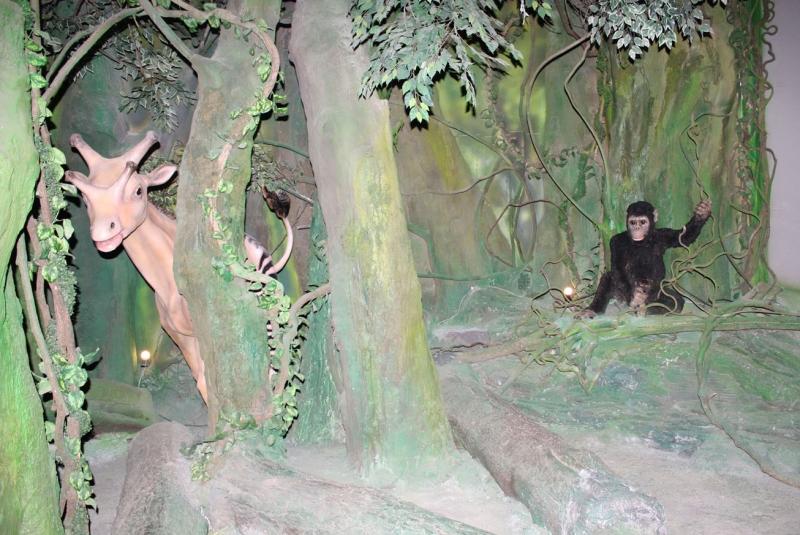 ห้องแสดงยุค Miocene
