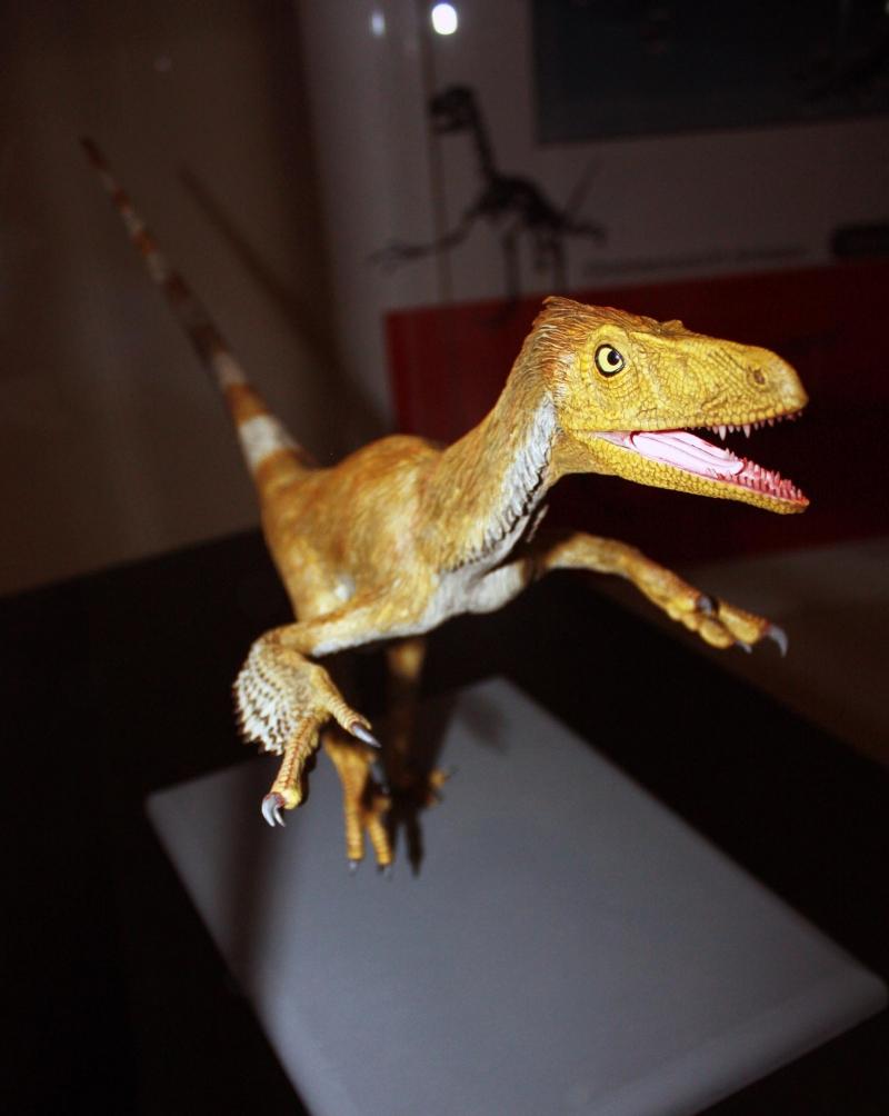 Fukuiraptor จาก Fukui Dinosaur Museum Japan