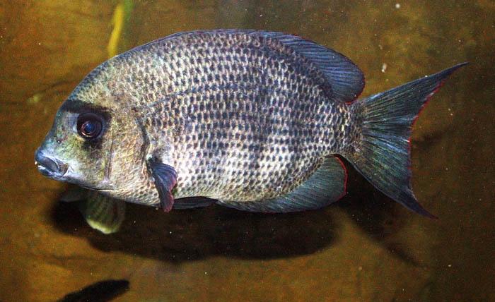 Madagasca Endangered species
